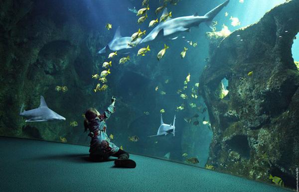 aquarium de la rochelle webzine du comptoir de la mer