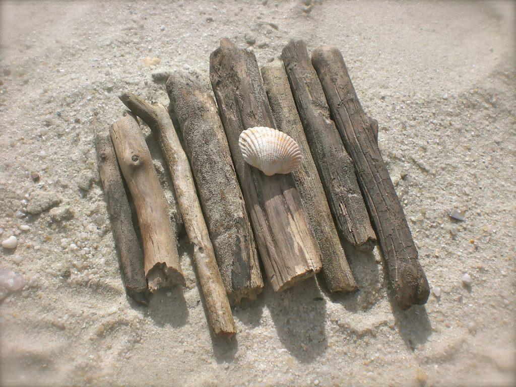 bois flotté et laisse de mer