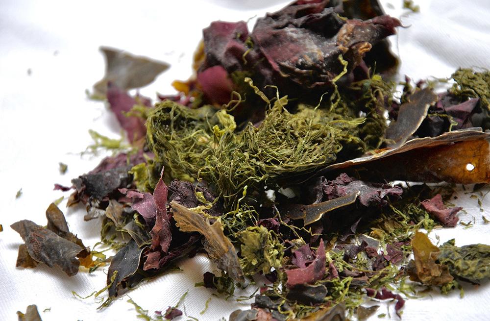 algue séchées iodées