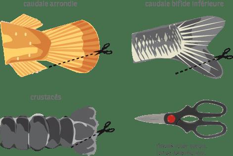 Marquage du poisson