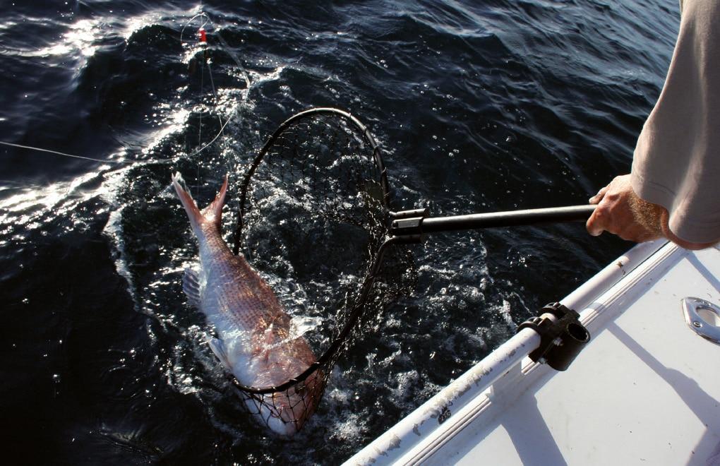 Pêche - mesurer captures - vignette
