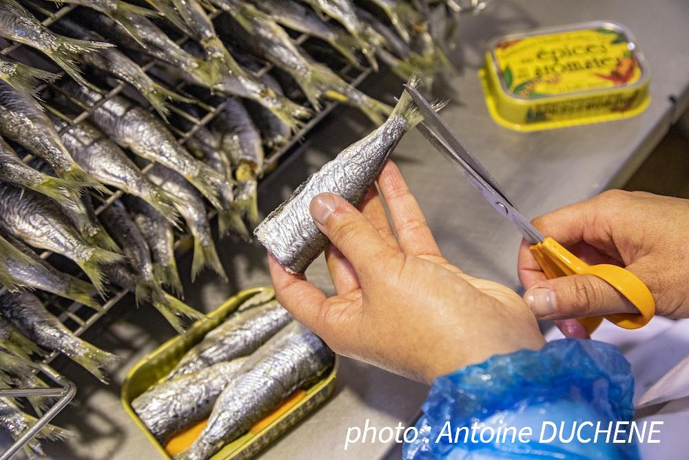 sardines coupées de manière artisanale