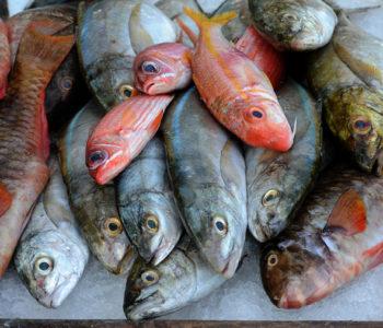 étal de poissons frais