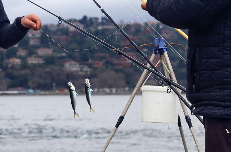 pêche à la verticale, à la traîne