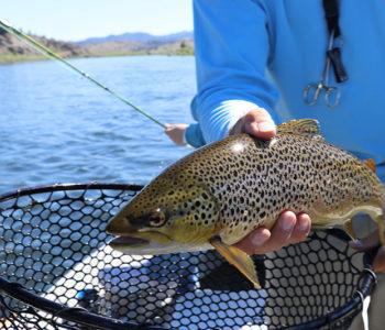pêcher en mars : truite ou lieu jaune