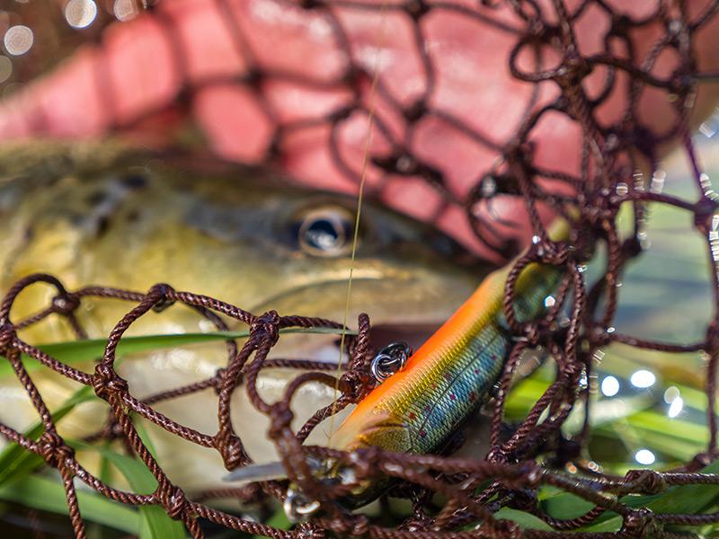 matériel pour la pêche à la truite