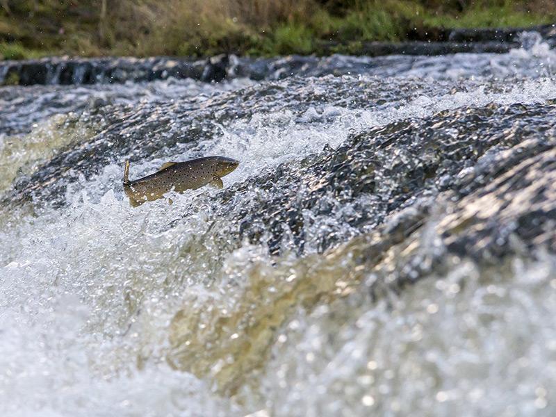 pêche à la truite en eau douce