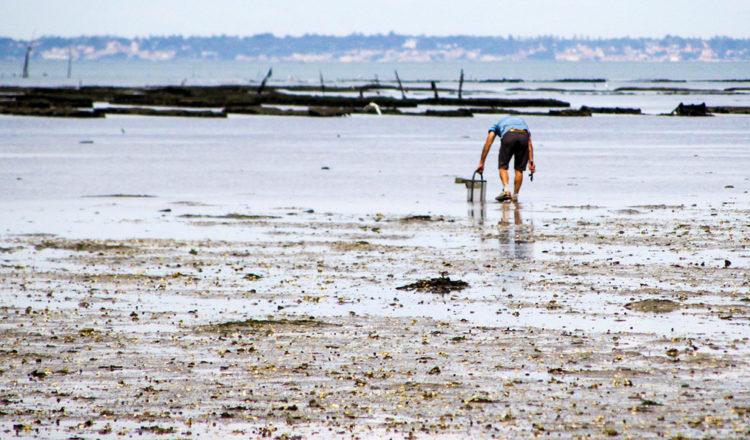 pêche à pied Noirmoutier